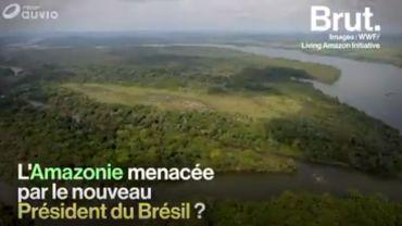 Brésil : l'Amazonie menacée par l'élection de Jair Bolsonaro
