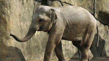 Après les élèves des écoles communales, les seniors ixellois sont également privés de visite au zoo
