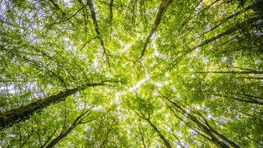 Mais si mondialement les forêts s'étendent, les régions des tropiques observent un déclin.