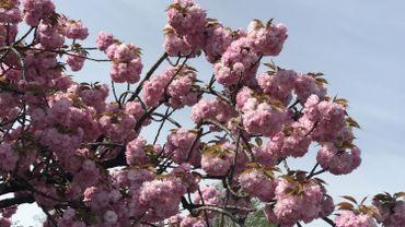 Liège au printemps : comme un air de vacances