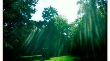 Un Center Parc à la place d'un Sunparks