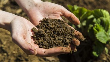 Testez la nature de votre sol pour mieux jardiner