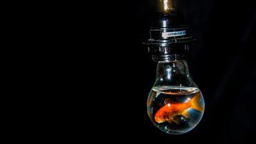 Vous avez probablement la même concentration qu'un poisson rouge