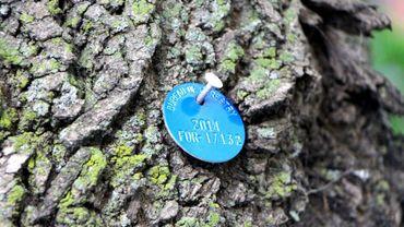 Un médaillon bleu indique que l'arbre a été traité avec des pesticides, à Chicago, le 29 juin 2016