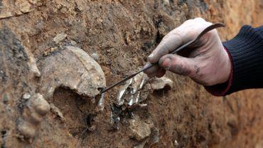 Cette dernière découverte relance les dés, révélant que les deux espèces se seraient croisées dans les savanes de l'Afar pendant environ 100.000 ans.