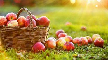 Créer son verger pour plus d'autonomie alimentaire: la ville de Namur va distribuer des arbres et arbustes fruitiers