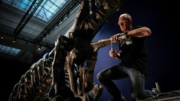 """Le squelette d'un Tyrannosaurus Rex en cours d'assemblage, le 24 mai 2018 au Muséum national d'histoire naturelle du Jardin des Plantes, à Paris, avant l'exposition """"un T.Rex à Paris"""""""