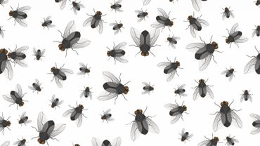 Bzzzzz... Comment éloigner les mouches de manière naturelle ?