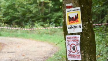Illustration picture shows in Etalle, Luxembourg Province, as multiple cases of African swine fever have been discovered in Belgium, Saturday 22 September