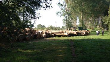 Plus ou moins 120 arbres seront abattus.