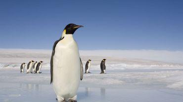 Les scientifiques ont identifié plus de 200 espèces encore jamais observées.