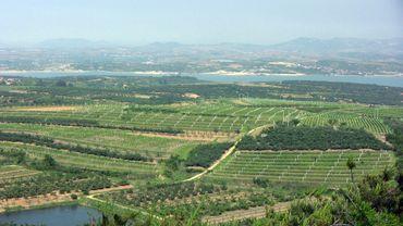 Vignoble de la péninsule de Shangdong, en Chine.