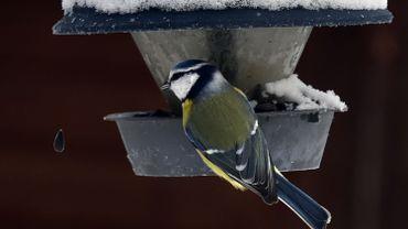 Levez les yeux et comptez les oiseaux ce week-end