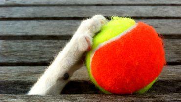 Se détendre la plante des pieds avec une balle de tennis