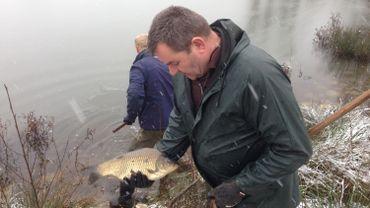 Plus de 500 kilos de poissons ont été relâchés dans le lac