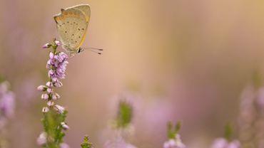 Ce week-end, recensez les papillons de votre jardin