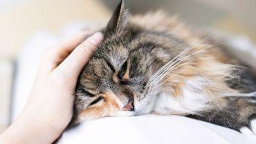 Jouer de la musique 'cat-friendly' calmerait les chats chez le vétérinaire, selon une étude