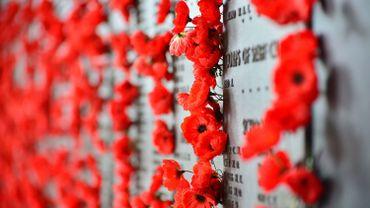 Pourquoi le coquelicot est-il un symbole de la Grande Guerre?