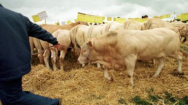 Trop d'antibiotiques dans les élevages: attention danger