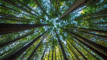 Combien de CO2 peuvent absorber les grands arbres ? La NASA a la réponse !