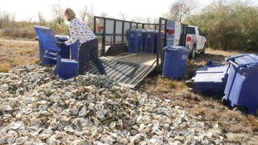 Sur les côtes du Texas, les coquilles d'huîtres sont recyclées en récifs.