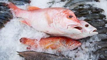 Bien choisir son poisson, un geste efficace contre la surpêche.