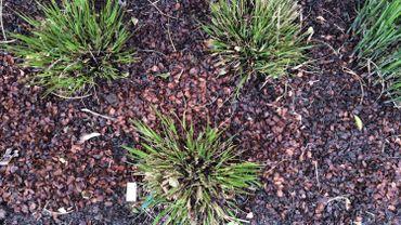 La couche d'écorces est la solution naturelle la plus efficace contre les mauvaises herbes