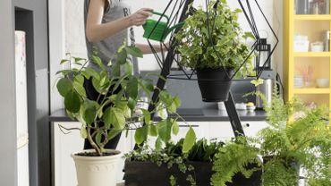 Le top 5 des plantes pour dépolluer votre intérieur