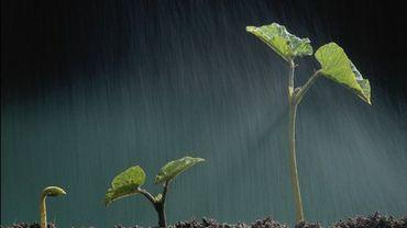 L'en vert de nos corps : une rêverie végétale