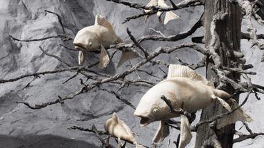 """""""Sog"""" ou les poissons volants"""