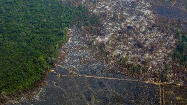 Entre 2018 et 2019, l'INPE a observé une augmentation de 85% de la déforestation