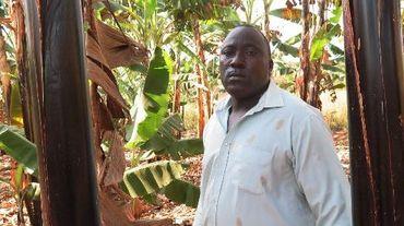 Charles Semakula, agriculteur, le 19 février 2015 dans sa bananeraie à Wakiso en Ouganda
