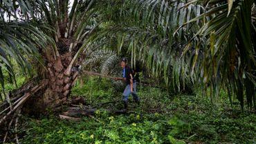 Pour lutter contre la déforestation, le Sri Lanka interdit l'importation d'huile de palme et la culture de palmiers à huile