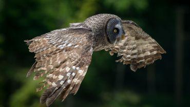 Après une longue attente, un oiseau s'est soudainement posé sur un arbre situé à dix mètres des chercheurs (illustration).