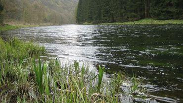 Certaines espèces de poissons de nos rivières menacées par le réchauffement climatique
