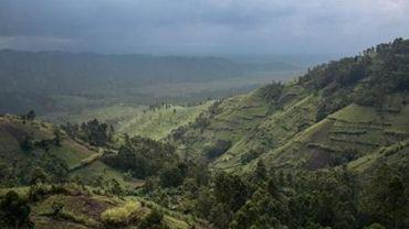 Plus de 170 enlèvements dans le parc des Virunga au Congo