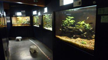 La baisse des subsides mettent l'aquarium de Bruxelles en difficultés