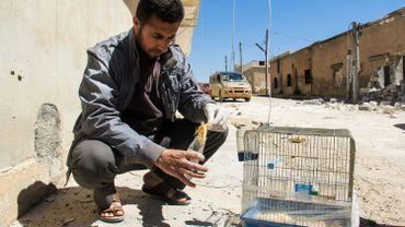 """Syrie: de nouvelles preuves de """"recours systématique"""" à des armes chimiques"""