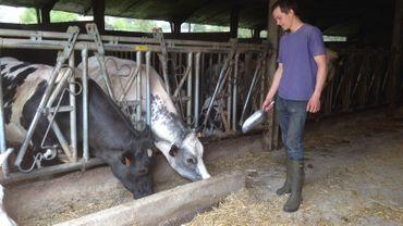 Plus de 200 têtes de bétail à nourrir