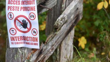 Peste porcine: la grande chasse d'Etalle dans le viseur des enquêteurs