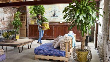 La plante du mois est le dracaena.