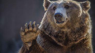 Theux : le parc animalier Forestia peut enfin vous ouvrir ses portes