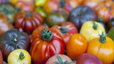 Mangez des tomates mes amours !