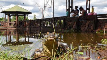 Paraguay : des caïmans déambulent près d'un centre commercial