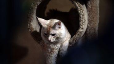 Le Conseil d'État dira si la Wallonie peut améliorer le statut juridique des animaux