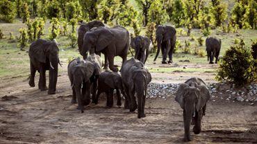 Des éléphants dans un parc national du Zimbabwe