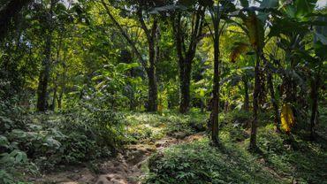 Un japonais a replanté 40 millions d'arbres de forêt vierge