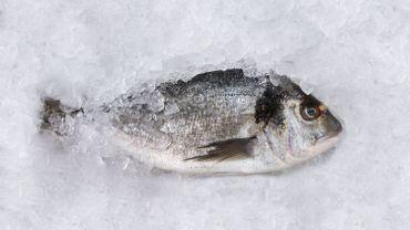 Comment ça, il n'est pas frais mon poisson?