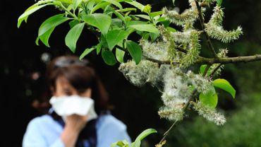 La saison 2019 du pollen a démarré: début d'une période à risque pour les allergiques à l'aulne et au noisetier