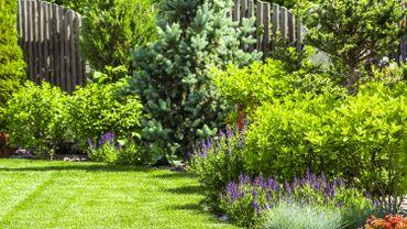 Jardin : comment se débarrasser des pucerons ?